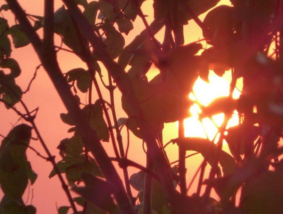 2015 A8 Sonnenuntergang 006