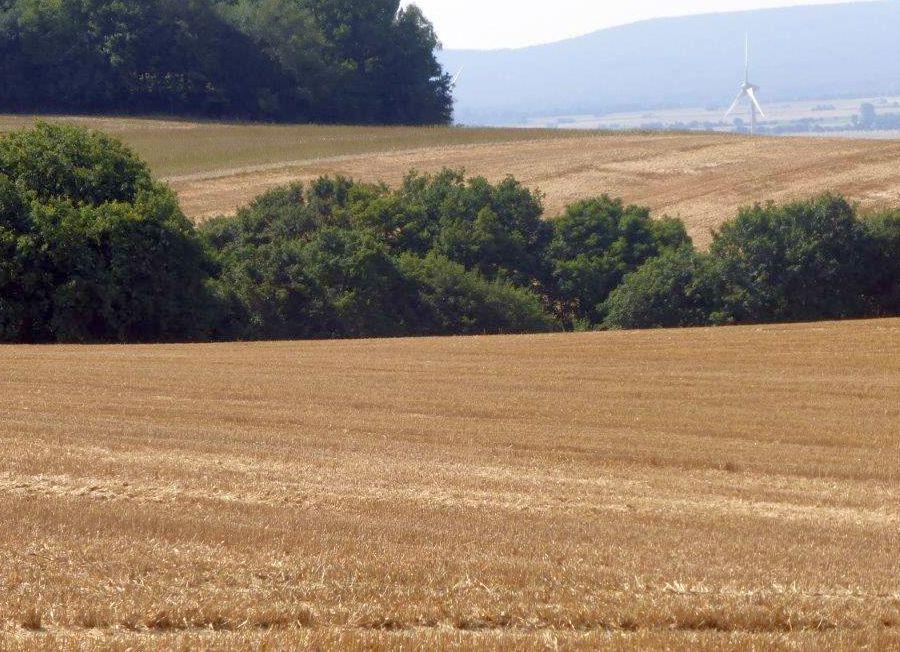 Weizenernte am Stemmer Berg 021