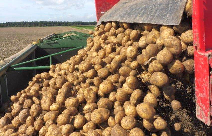 2015 M9 Ernte Kartoffeln 029