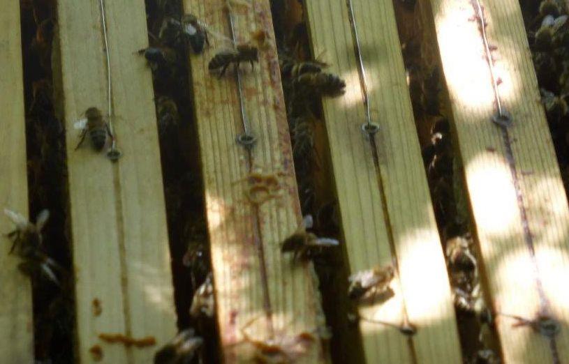 2015 A8 Bienen 003