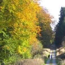 So schön kann der goldene Oktober im Deister sein