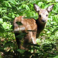 Auf den Feldern rückt jetzt wieder der Schutz von Wildtieren in den Blickpunkt