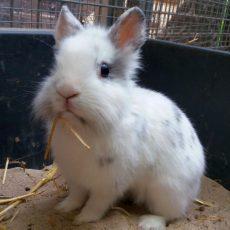 Tierschutzverein muss Kleintierhaus wegen Überfüllung schließen