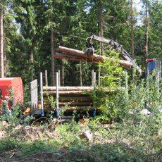 Waldbesitzer wollen wieder mehr Holz ernten