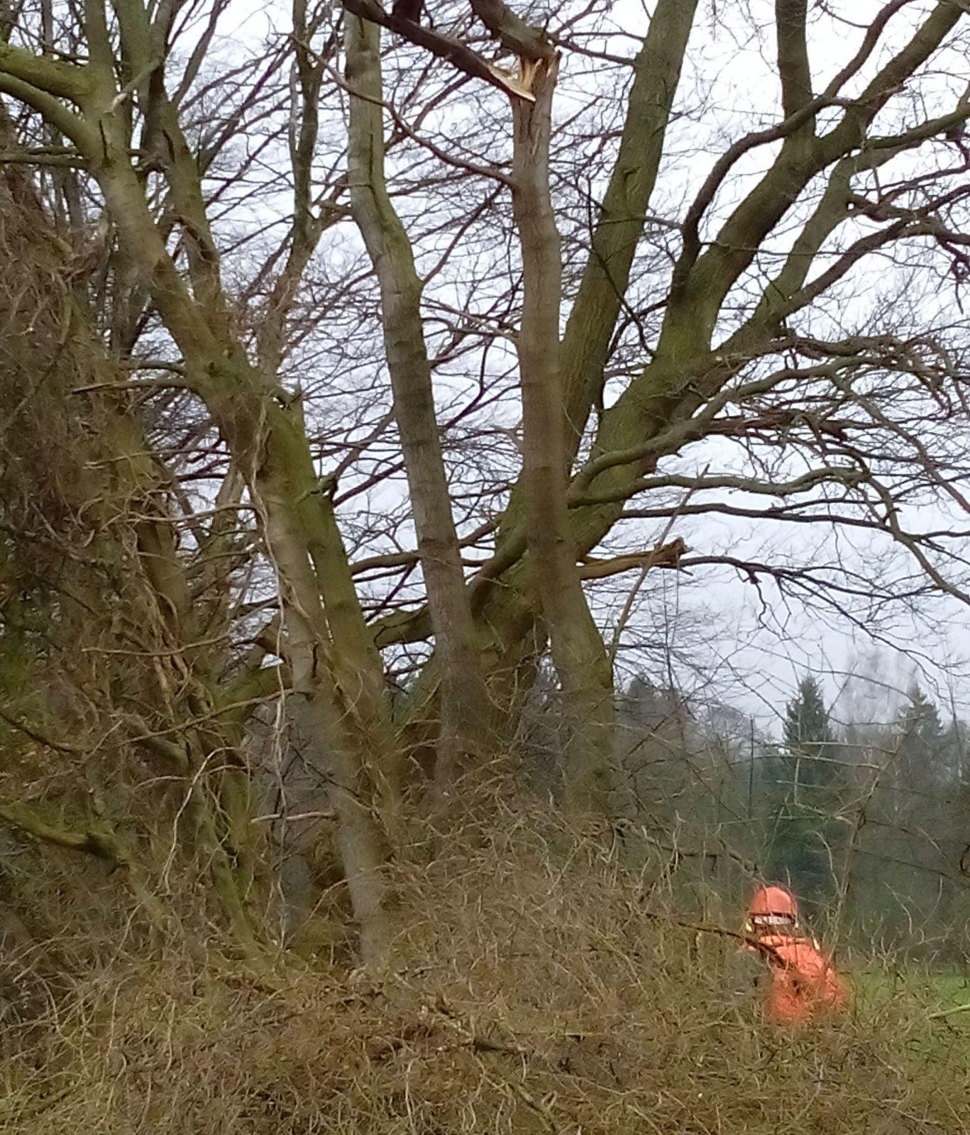 Feuerwehr egestorf macht den weg zu den sch tzenh usern - Baum auf spanisch ...
