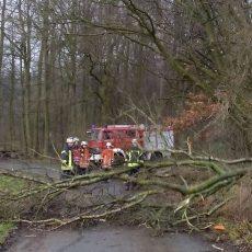 """Feuerwehr Egestorf macht den Weg zu den Schützenhäusern und zur """"Waldapotheke"""" wieder frei"""