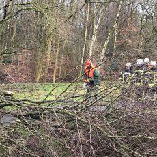 Umgestürzter Baum blockiert Fahrradweg