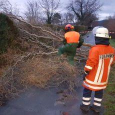Umgestürzter Baum blockierte die Weberstraße