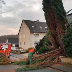 Baum droht auf Straße und Spielplatz zu stürzen