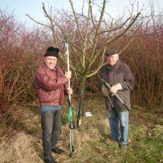 Siedlergemeinschaft betreibt Pflege des Jubiläumsbaums