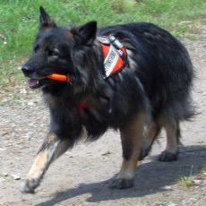 Spürnasen gesucht: Rettungshundestaffel braucht Verstärkung