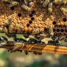 Sommerwetter sorgt für gute Honigernte