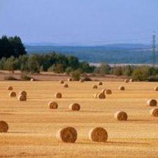 Extremsommer trocknet die Erträge auf den Feldern weg