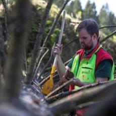 Auswirkungen der Dürre: Borkenkäfer auch für Brennholzkunden nicht ohne Folgen