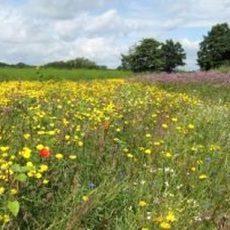 Landwirte sind zwischen Insektenschutz und Wirtschaftlichkeit hin- und hergerissen