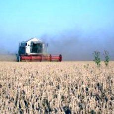 Folge der Dürre: Die Erntevorräte werden knapp