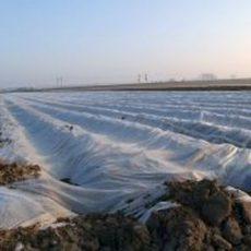 Frühkartoffeln kommen pünktlich zur Spargelzeit auf den Markt