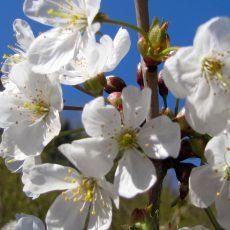Die heimische Natur legt jetzt den Frühlingsturbo ein