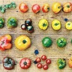 BUND-Ortsgruppe lädt für den 5. Mai zur großen Tomatenbörse in die Ökostation ein