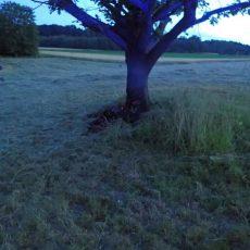Baum beim Schützenhaus gerät aus ungeklärter Ursache in Brand
