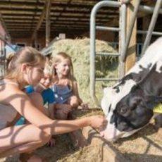 Urlaub auf dem Bauernhof ist weiterhin ein Renner