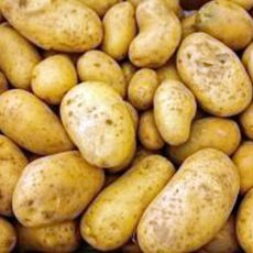 Für die Kartoffelanbauer war es bislang zu trocken