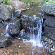 Zwei feuchte Herbstwochen bringen das Murmeln in die Bäche und Quellen des Deisters zurück