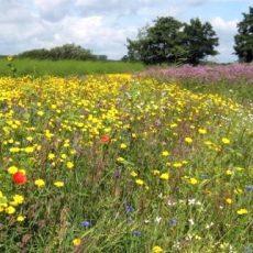 Kommt auch in Niedersachsen ein Volksbegehren zum Artenschutz? – Landwirte sind irritiert