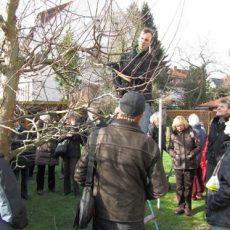 Siedler bieten Baumschnitt-Lehrgänge für Ziergehölze und Obstbäume an