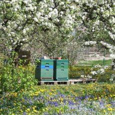 NABU zieht erste Bilanz zum Gartentelefon