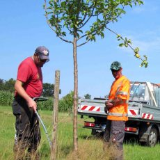 Junge Bäume brauchen jetzt Wasser: Die BBI hilft