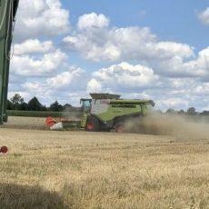 Endspurt: Landwirte erwarten durchschnittliche Ernteerträge