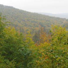 Der bunte Deister ist auch bei feucht-kaltem Herbstwetter einen Gang wert