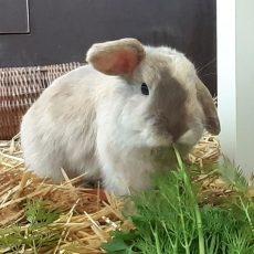 Tier der Woche: Kaninchen-Dame Cosy darf bald ausziehen