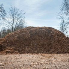 Holzdiebe im Saupark werden auf frischer Tat ertappt