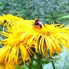 So fühlen sich Insekten im frühlingshaften Garten wohl