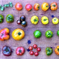 Beliebte Tomatenbörse findet auch in diesem Jahr in der Ökostation statt