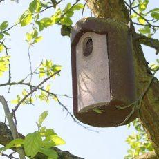 Nistkästen helfen Singvögeln in der Brutsaison