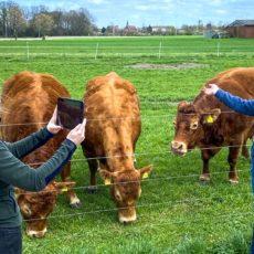 Besuche auf dem Bauernhof kommen auch digital gut an