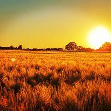 Herrlicher Sonnenuntergang bei Bantorf aufgenommen