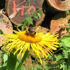 Stadtverwaltung hat keine Zeit für Bienen