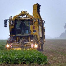 Ernte 2021: Bauern schwanken zwischen enttäuschten Hoffnungen und Zufriedenheit